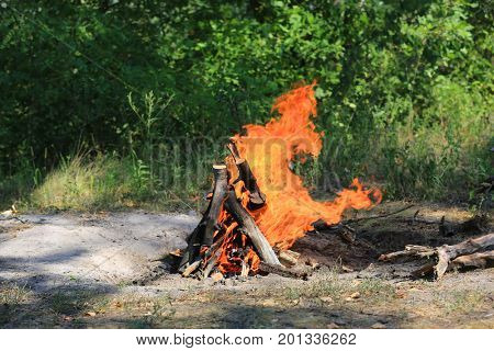 camp fire on meadow in sunny green forest