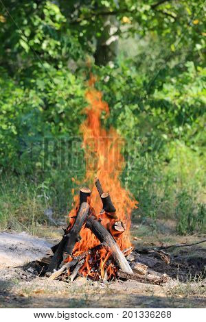 Hot flame of campfire in forest meadow
