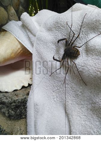 Shower neighbors in the tropics on the towel