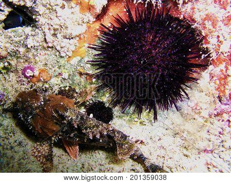 Vida marina cerca de la costa en el Mediterráneo