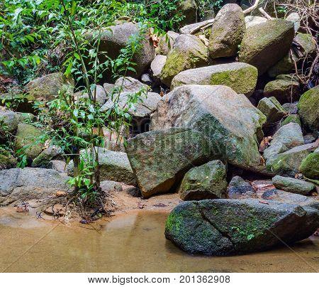 Bright Jungle With River. Natural Landscape