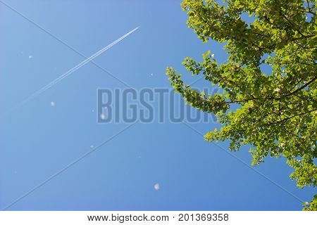 Treetop canopy of a tree against beautiful clear blue sky; airplane and trail visible on sky