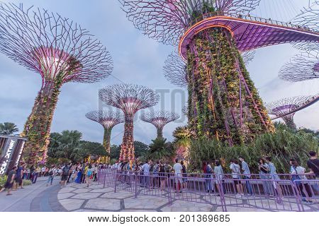 Singapore, Singapore - July 23, 2017: Illuminated Supertrees and Skywalk in Gardens by the bay in Singapore at night.