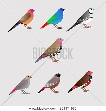 Seven bright colored birds,  finches, white background