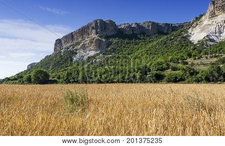 Field of wheat with mountainous backdrop. Stock photo.