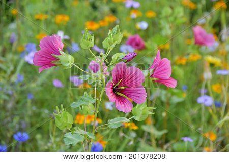 Summer flowers in the garden in sunlight