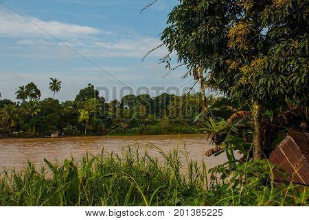 Kinabatangan river Malaysia rainforest of Borneo island Sabah