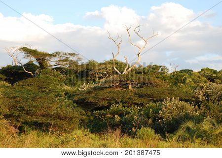 Dense trees on Serengeti, a typical view