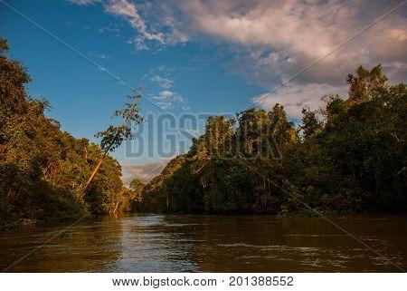 Kinabatangan River, Rainforest Of Borneo Island, Sabah Malaysia
