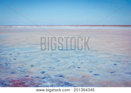 Salt, brine and mud of pink lake, colored by microalgae Dunaliella salina, enriching water by beta-carotene, used in medicine, dermatology  and  spa procedures.