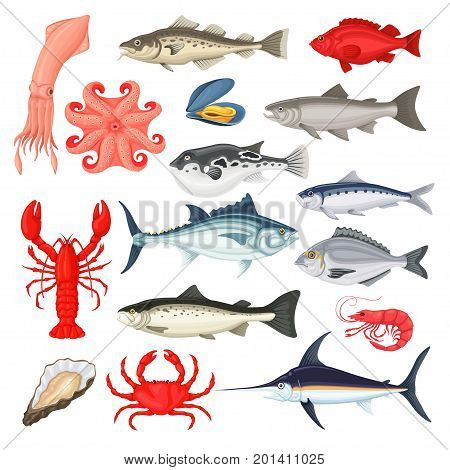 Seafood collection. Fish and shellfish delicious menu, market from oceans around the world, premium restaurant cuisine. Vector flat style cartoon illustration, isolated on white background