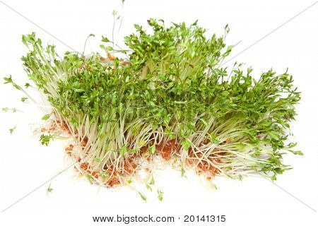 Fresh green healthy sprouts on a white background