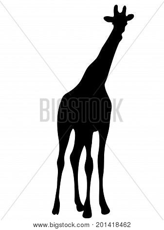 View on the silhouette of a giraffe - digitally hand drawn vector illustraion