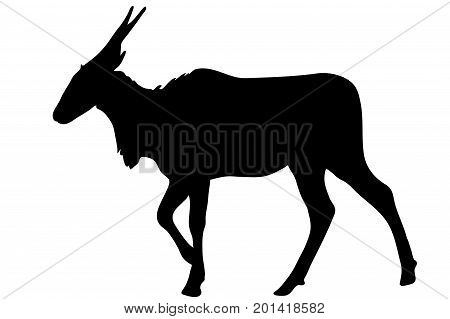 View on the silhouette of a common eland antelope - digitally hand drawn vector illustraion