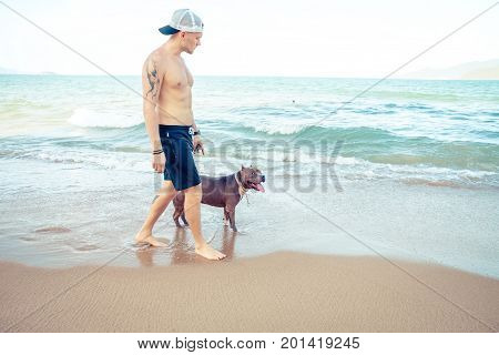 Young man with dog american pit bull terrier walking on the tropical beach. Man and dog strolling on seaside.