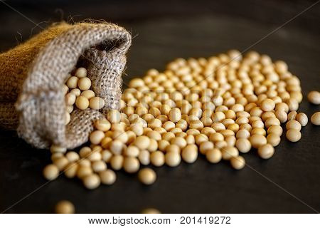 healthy soybean on dark background in jute sack