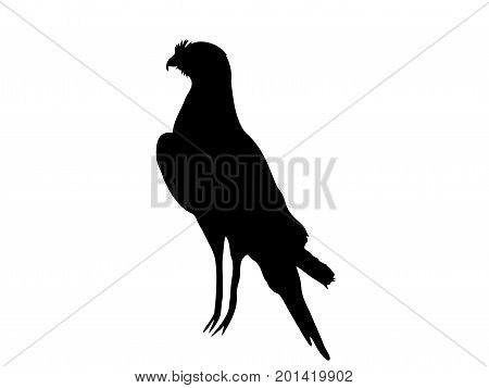 View on the silhouette of a chanting goshawk - digitally hand drawn vector illustraion