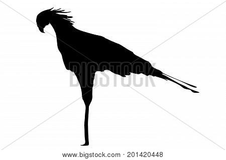 View on the silhouettes of a secretary Bird - digitally hand drawn vector illustraion