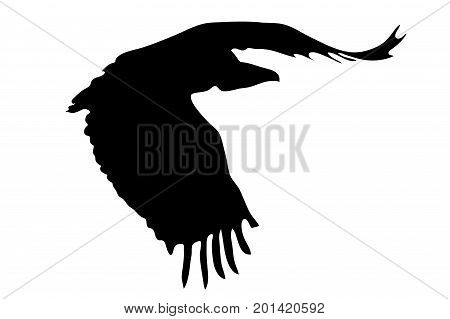 View on the silhouette of a african vulture - digitally hand drawn vector illustraion