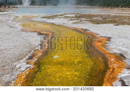 Yellow Sulfur Trail From Hot Springs