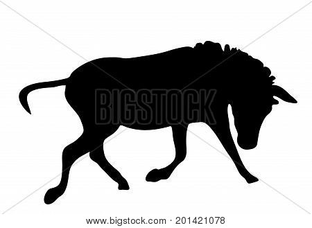 View on the silhouette of a moving zebra - digitally hand drawn vector illustraion