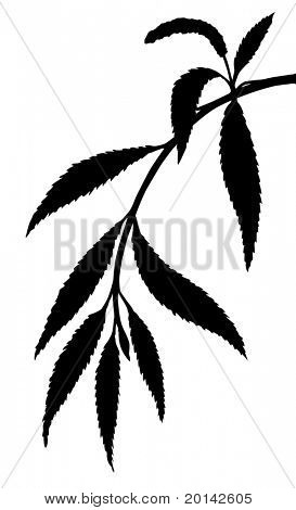 vector silhouette osier branch on white background