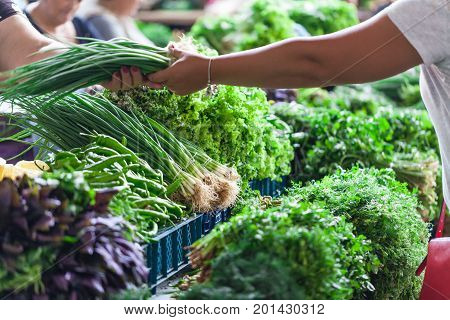 Spring Onions Also Known As Salad Onions, Scallions Or Green Onions On The Market