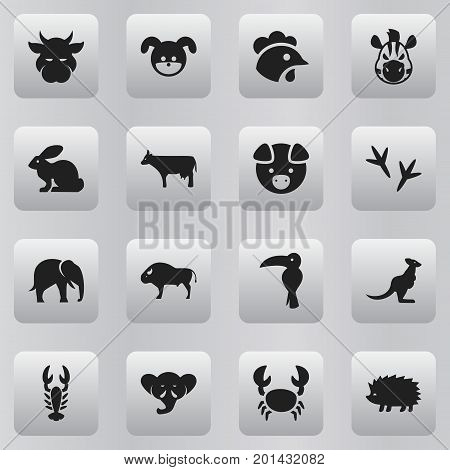 Set Of 16 Editable Animal Icons. Includes Symbols Such As Porcupine, Proboscis, Tropical Bird And More