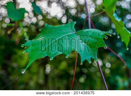 close up of a green leaf in the morning with rain drops