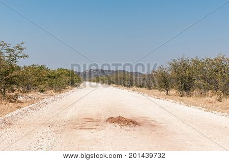 An anthill in the middle of a road in North-Western Namibia