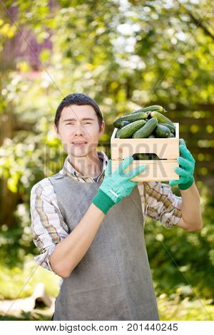Brunet with box of cucumbers
