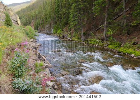 Animas River running through Silverton town in Colorado