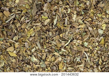 full screen macro shot of raw tobacco leaves unprocessed ideal for copy space text or for used of textures of backgrounds