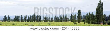 Landscape, Lujan de Cuyo, Mendoza Province, Argentina
