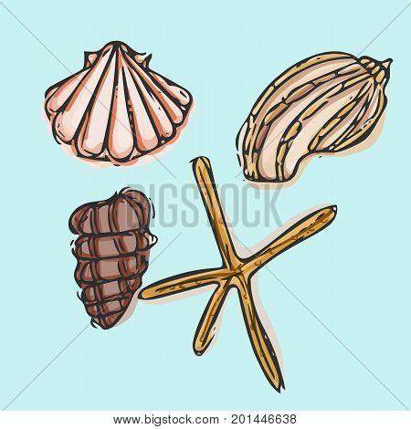 Sea shells symbols collection. Sea shells icon.