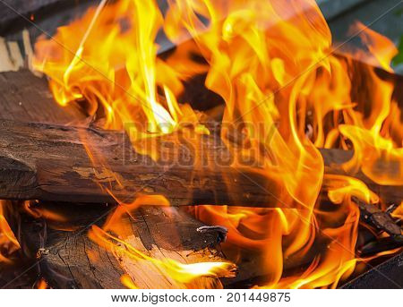brown log is covered with an orange bright flame of a fire with long tongues