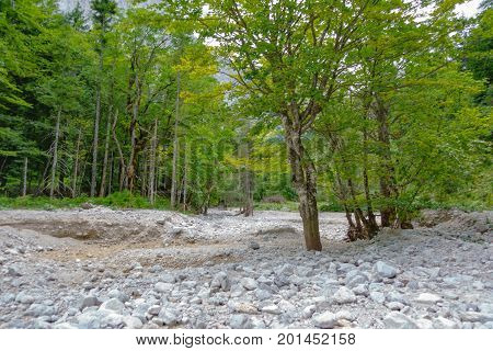 Dry mountain riverbed, woods and trees, stones