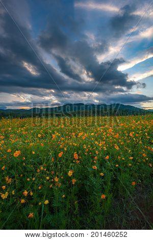 Flower Field During Beautiful Sunset