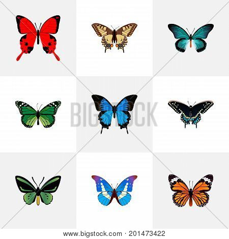 Realistic Common Blue, Pipevine, Tropical Moth And Other Vector Elements