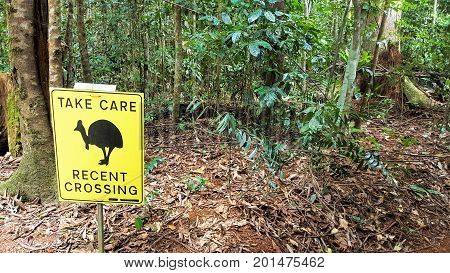 take care recent crossing of cassowary sign in the rainforest