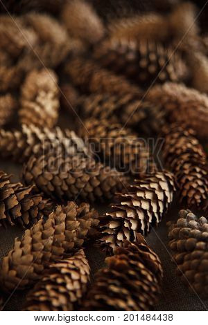 Cozy Background Of Pine Cones. Merry Christmas Brown Backdrop. Fir Bumps Pattern