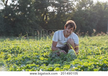 Young farmer checking his watermelon field at organic eco farm. Farmer controlling grow his product