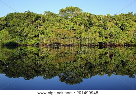 The Amazon Rainforest and Blue Sky Perfectly Mirrored in the Water. Amazonas Brazil