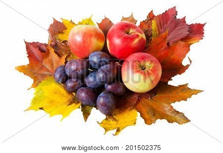 Apples plums and autumn leaves isolated on white background