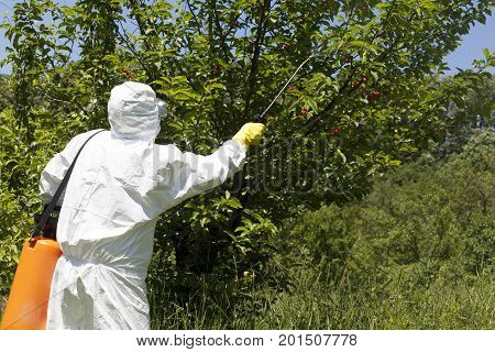 Farmer spraying toxic pesticides. Non-organic fruit. Agricultural pollution.