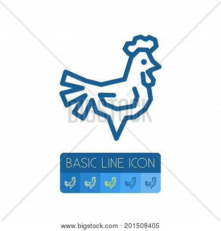 Chicken Vector Element Can Be Used For Chicken, Cockerel, Rooster Design Concept.  Isolated Cockerel Outline.