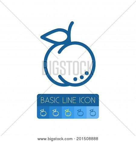 Juicy Vector Element Can Be Used For Juicy, Apricot, Fruit Design Concept.  Isolated Apricot Outline.