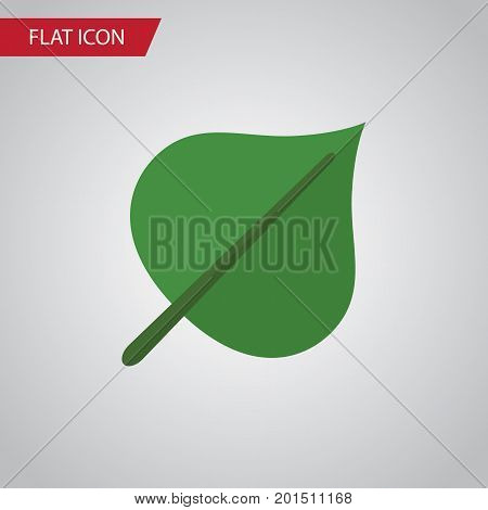 Hickory Vector Element Can Be Used For Hickory, Foliage, Leaf Design Concept.  Isolated Foliage Flat Icon.