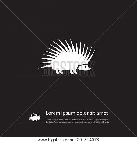 Urchin Vector Element Can Be Used For Needley, Hedgehog, Urchin Design Concept.  Isolated Needley Icon.