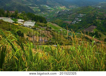 Villages And The Hills With Fields. Sabah, Borneo, Malaysia